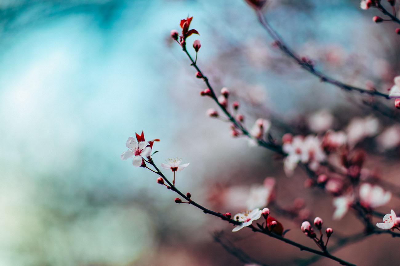 Photo arbre en fleurs